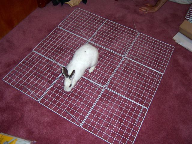 Homemade rabbit cage flooring floor matttroy - How to make a rabbit cage ...